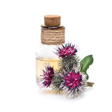 Burdock oil and burdock flowers. On a white background stock images