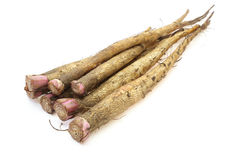Burdock Royalty Free Stock Image