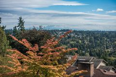 Burein Landscape. A view of autumn leave and Mount Rainier in Burien, Washington royalty free stock photo