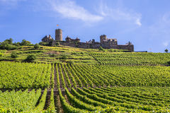 Burg Thurant aux vignobles de la Moselle image libre de droits