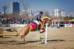 BURGAS, BULGARIA - 4 de marzo de 2017: Acción tirada de jinetes en carrera de caballos Fotografía de archivo libre de regalías