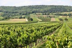 Burgenland vineyard Royalty Free Stock Photo