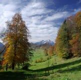 Burgenstock Wald Lizenzfreies Stockfoto
