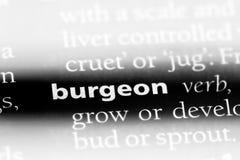 burgeon immagini stock libere da diritti