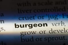 Burgeon. Word in a dictionary.  concept Royalty Free Stock Images