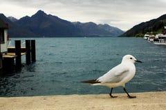 Burger van Nieuw Zeeland Royalty-vrije Stock Fotografie