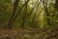 Burggraben im Wald Lizenzfreie Stockfotografie