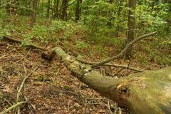 Burggraben im Wald Lizenzfreies Stockfoto
