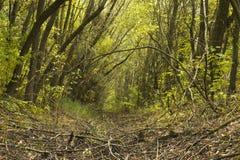 Burggraben im Wald Stockfotos