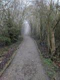 Burggrabenpark-Waldbahn, Maidstone, Kent, Medway, Vereinigtes Königreich Großbritannien lizenzfreies stockbild