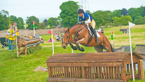 Burgie国际马试验2013年 库存照片