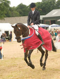 Burgie International Horse Trial 2010. Royalty Free Stock Photo