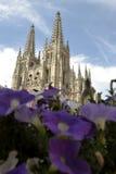 Burgos katedra za fiołkowymi kwiatami, Hiszpania Zdjęcia Stock