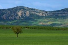 Burgos landscape. A Burgos landscape in Spain Stock Image