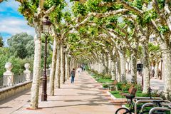 Tree-lined promenade boulevard during the Spring at the historic centre of Burgos, Spain Stock Images