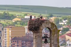 Nest of storks in the bell tower of the church royalty free stock image