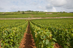Burgunder vinyard Stockfotografie