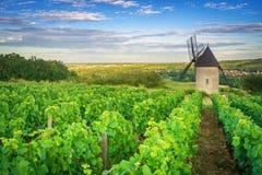 Burgunder-Weinberg - Frankreich stockbild