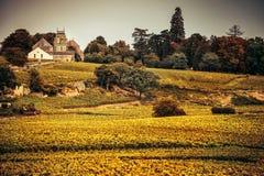 burgundy αμπελώνες της Γαλλίας στοκ φωτογραφία με δικαίωμα ελεύθερης χρήσης