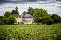 burgundy αμπελώνες της Γαλλίας στοκ εικόνα με δικαίωμα ελεύθερης χρήσης
