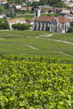 burgundy Γαλλία αμπελώνες Στοκ εικόνα με δικαίωμα ελεύθερης χρήσης