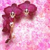 Burgundy λουλούδια ορχιδεών στο εκλεκτής ποιότητας υπόβαθρο Στοκ φωτογραφία με δικαίωμα ελεύθερης χρήσης