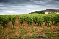 Burgundy, πολύ κάστρο πύργων περιβάλλεται από πολλά στρέμματα των αμπελώνων και είναι μεγάλοι παραγωγοί κρασιού Γαλλία στοκ φωτογραφία