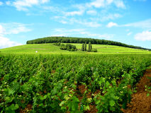 Burgundy colours (France). Burgundy is a historical region of east-central France. It is well known for both its red and white wines, mostly made from Pinot noir Stock Photo
