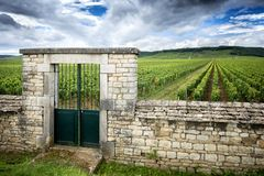 Burgundy, Cote d`Or. Vineyard with fence stone wall and access gate. Burgundy, Clos de Vougeot. France. Present on an area of about 50 hectares, Clos de Vougeot Stock Image