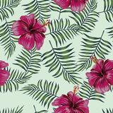 Burgundy hibiscus on the seamless leaves background royalty free stock photo