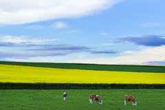 Burgundy landscape Royalty Free Stock Photography