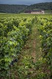 Chateau with vineyards, Burgundy, France stock photography