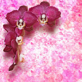 Burgundy orchid flowers on vintage background Royalty Free Stock Photography