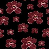 Burgundy orchid Phalaenopsis floral seamless pattern. Exotic spring summer flowers in bloom. Burgundy orchid Phalaenopsis floral seamless pattern. Exotic spring royalty free illustration