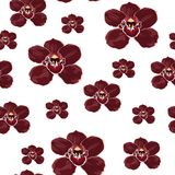 Burgundy orchid Phalaenopsis floral seamless pattern. Exotic spring summer flowers in bloom. Burgundy orchid Phalaenopsis floral seamless pattern. Exotic spring vector illustration