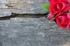 Burgundy pączek na starym drewnie z i róże pękają pole Zdjęcia Stock