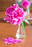 burgundy pionvase Royaltyfria Bilder