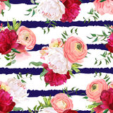 Burgundy red and white peonies, ranunculus, rose seamless vector pattern. Navy striped elegant print with luxury bright flowers Royalty Free Stock Photography