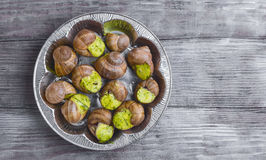Burgundy snail on a plate Royalty Free Stock Photo