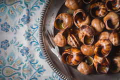 Burgundy snails   on the napkin pattern background top view Royalty Free Stock Images