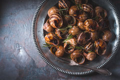 Burgundy snails with rosemary  on the stone background top view Stock Photos