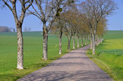 Burgundy, tree-lined road Royalty Free Stock Image