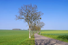 Burgundy, tree-lined road Royalty Free Stock Photos