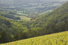 Burgundy view Royalty Free Stock Images
