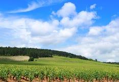 burgundy vingårdar Royaltyfri Fotografi