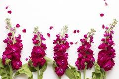 Burgundy zapasu kwiaty Zdjęcia Stock