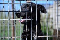 burhund inom Arkivfoto