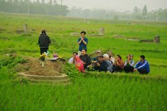 Burial in the rice field Royalty Free Stock Images