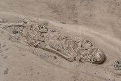 burial skeleton human bones from ancient grave stock photography