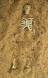 Buried skeleton bones in the sand Royalty Free Stock Photography